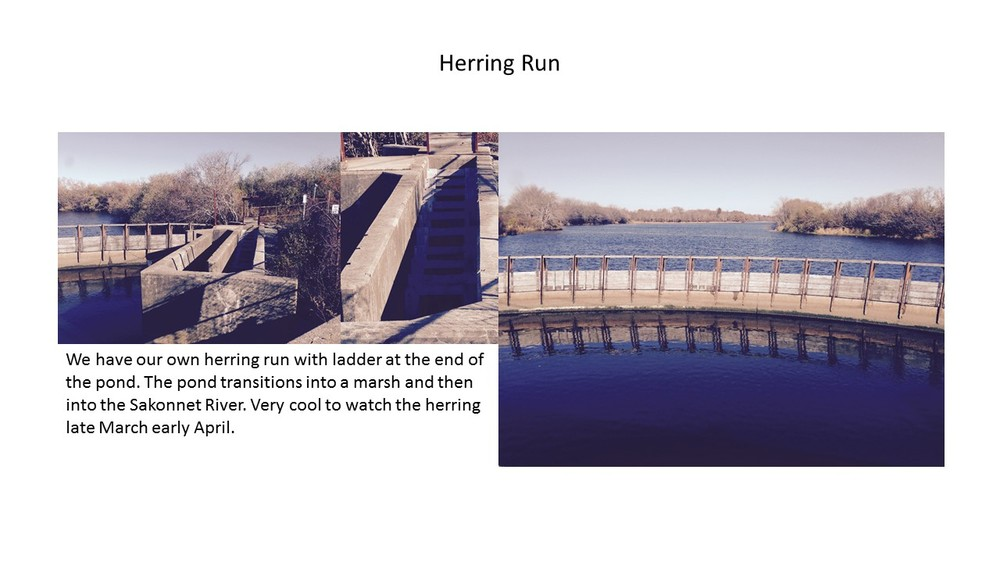 Herring Run