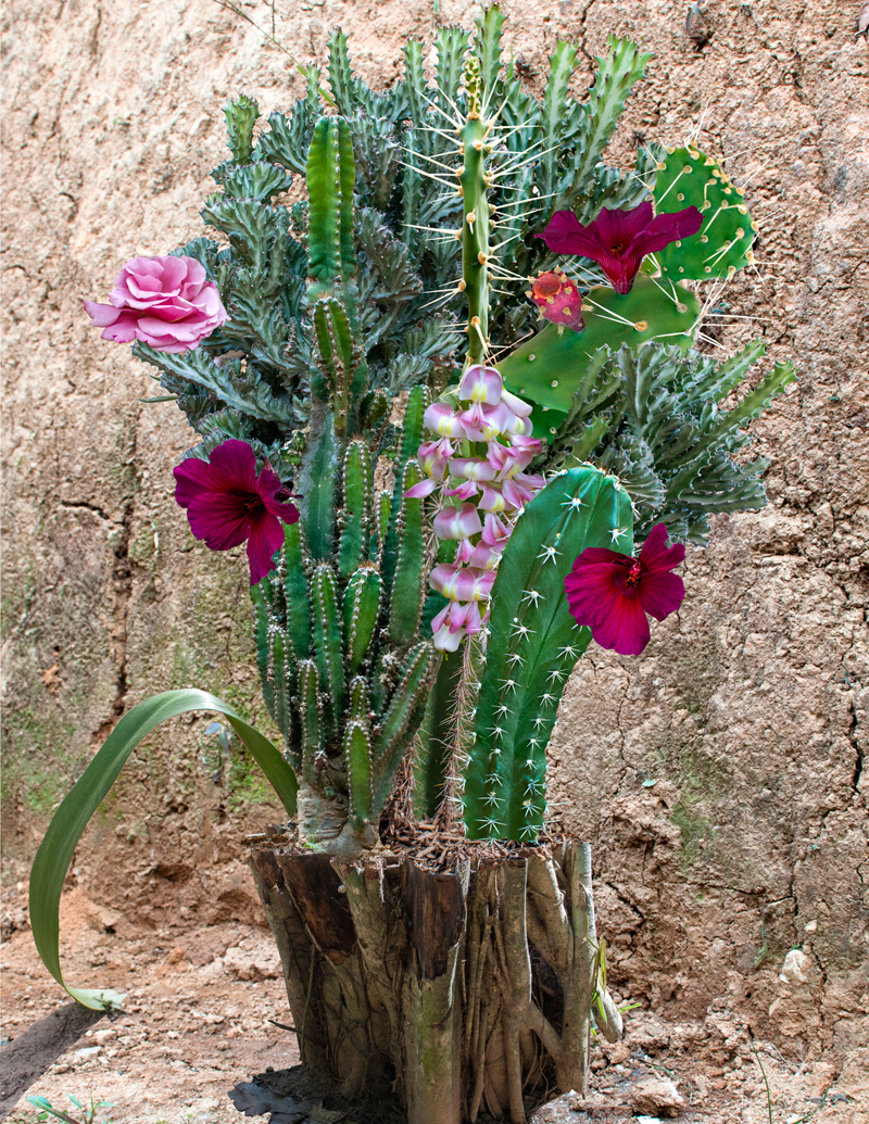 11-cactus-tronco.jpg
