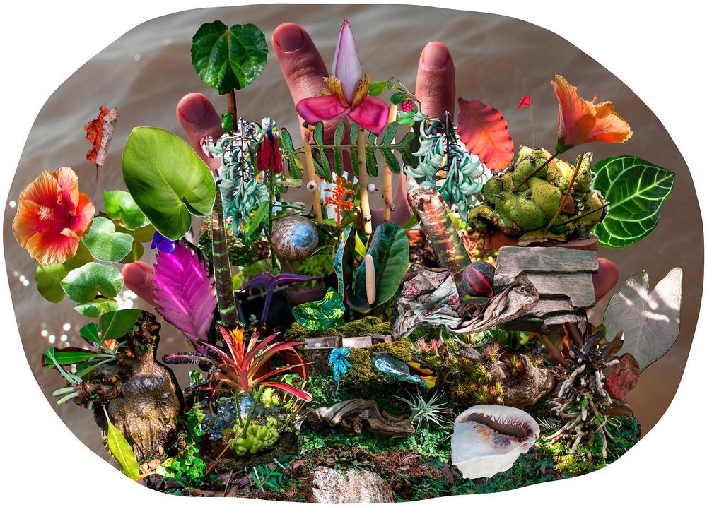Plant_Collage_Lg_web.jpg