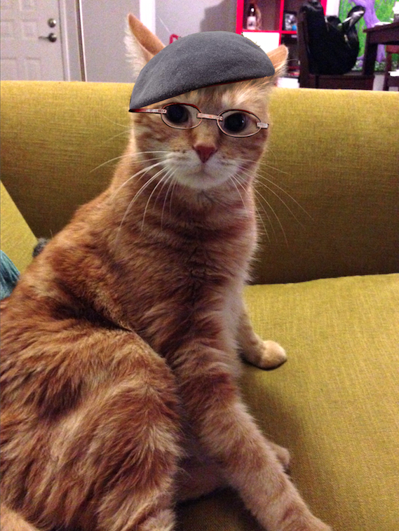 derpycats :     my friends cat Tomo reminds me of Jamie from Myth Busters…so I did what had to be done….