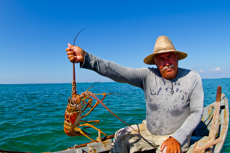 It was lobster season. This local fisherman showing his catch, represents the only commercial fishing of any kind allowed in Jardines de la Reina.