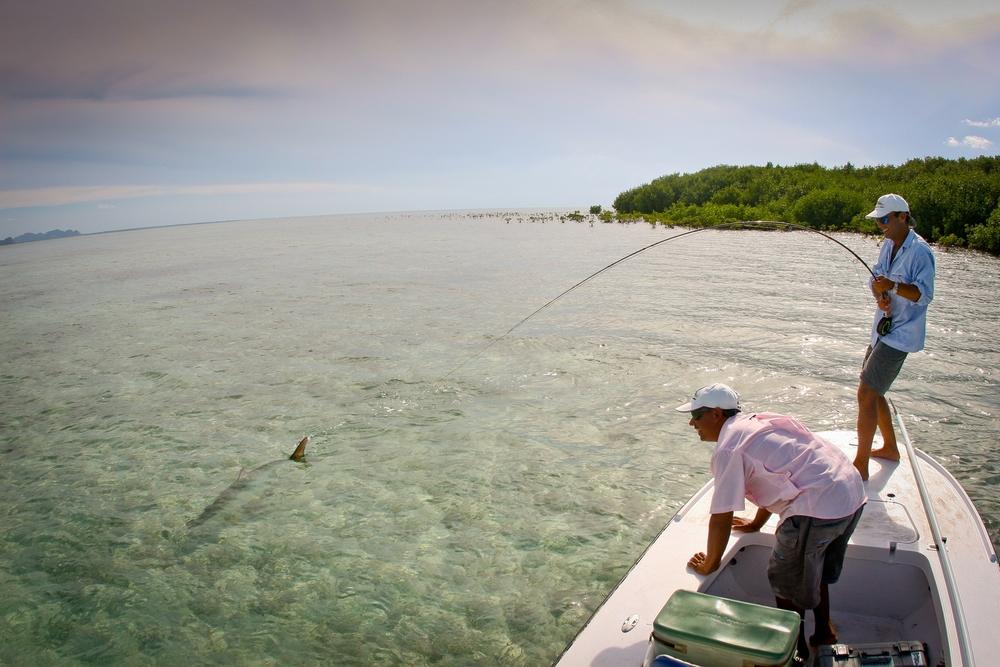 Landing a big Tarpon at Isla de la Juventud