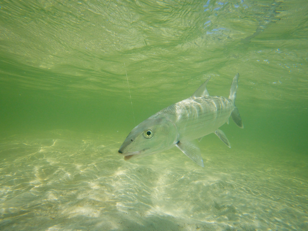 Bonefish-Zapata, Cuba