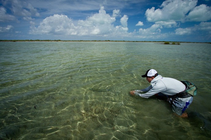 Releasing a backcountry Bonefish, Cayo Cruz, Cuba