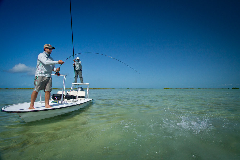 Fighting a Bonefish, Zapata, Cuba