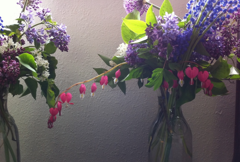 Hand-crafted bouquets of lilac and bleeding hearts by Jill Aiman.  I used vintage milk bottles for vases.  29 May 2011.