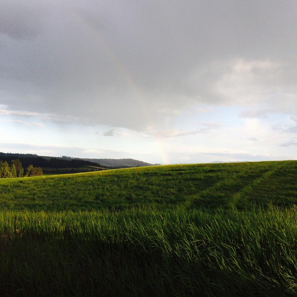 Faintest of Rainbows. 16 June 2014.