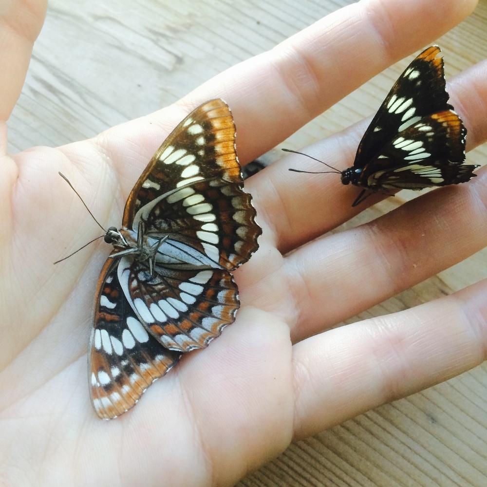 Jill holds two butterflies she found. 7 July 2014.