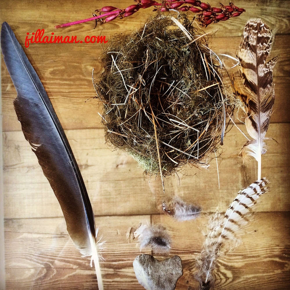 Can you leave the nest for a while?  Wild-Crafted birds nest.  Pink Seeds from the Forest.  Blue Heron Feather, Owl Feather, Turkey Feather.  Heart Rock.  August 2014.