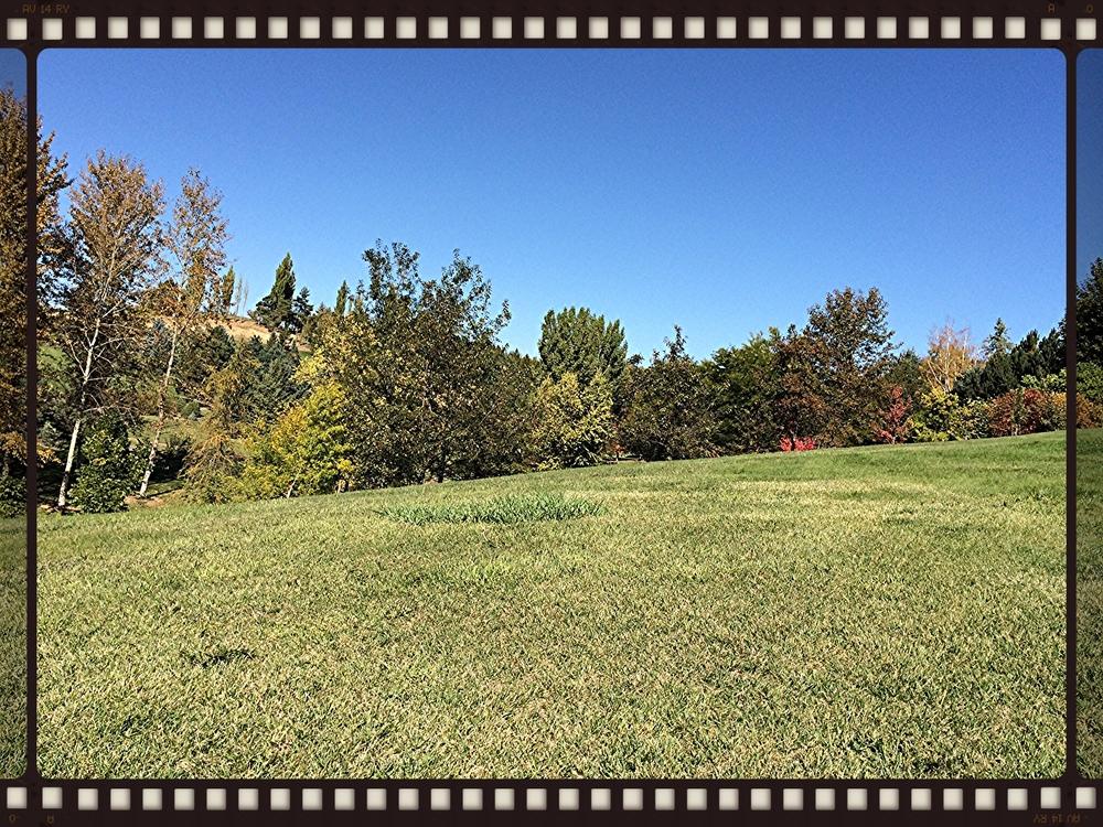 My view, picnicing at University of Idaho Arboretum. 7 October 2014.