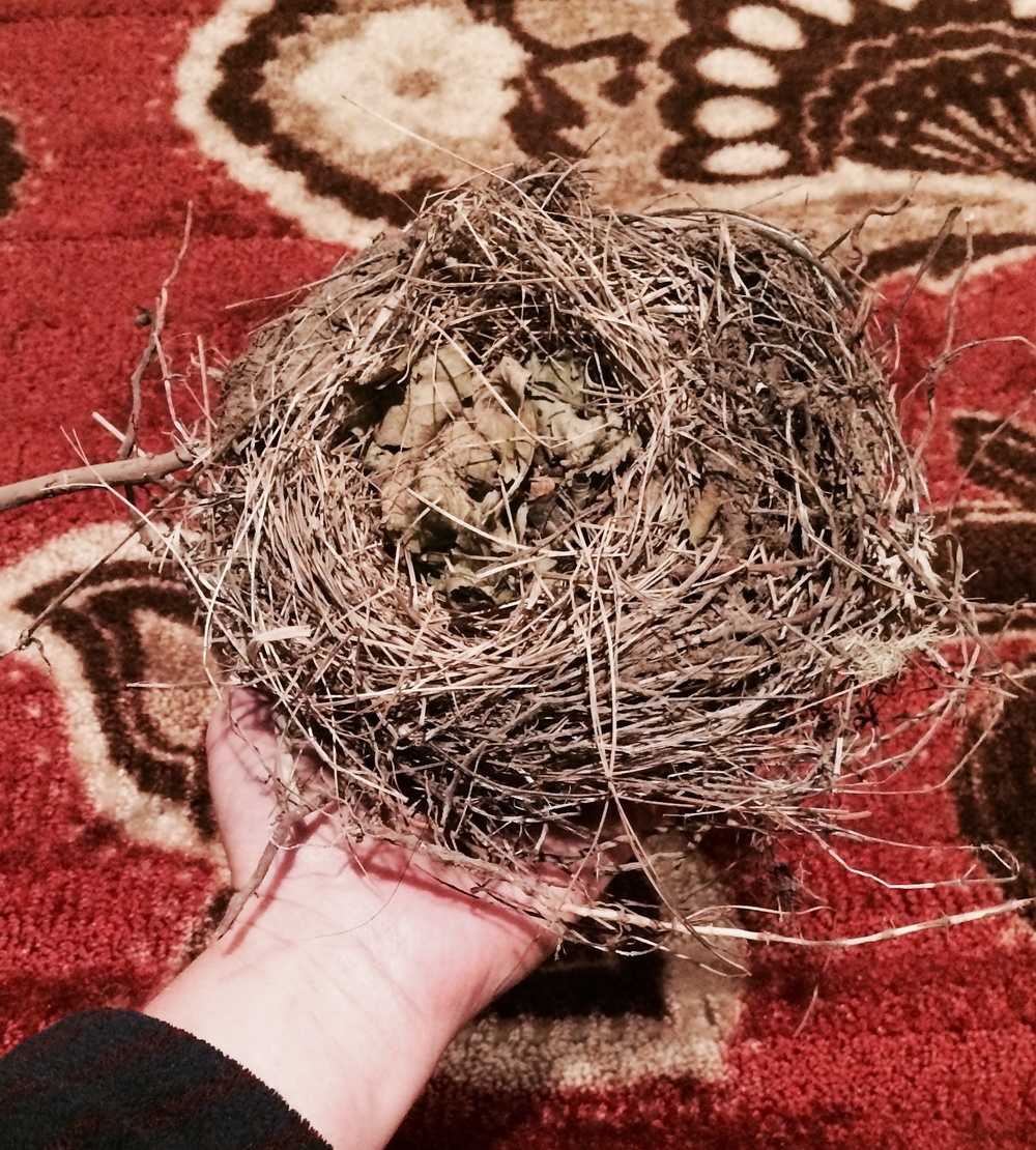 Wild Crafted nest.