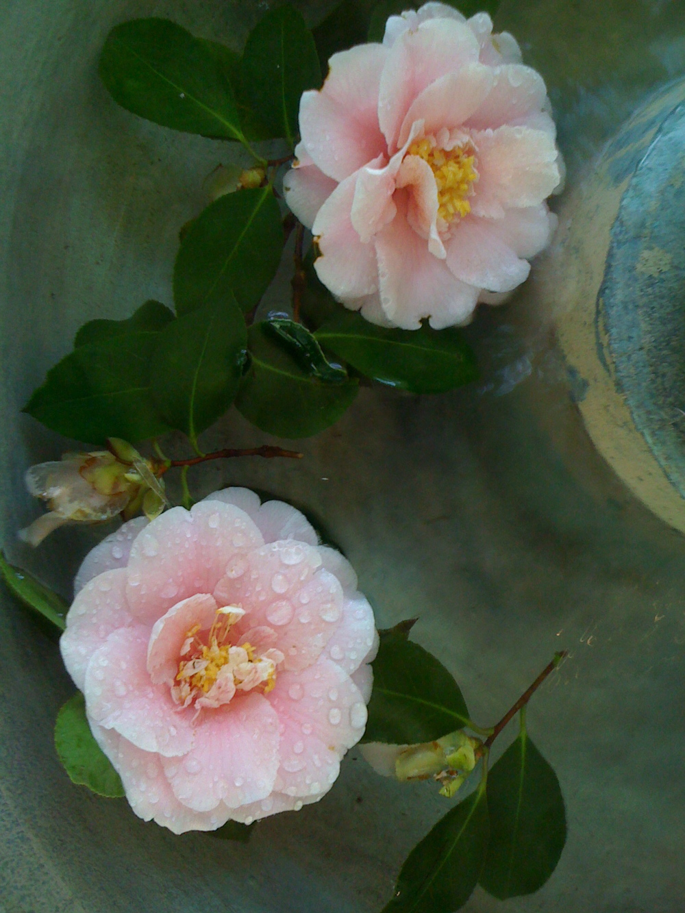 flowersfromananda.jpg