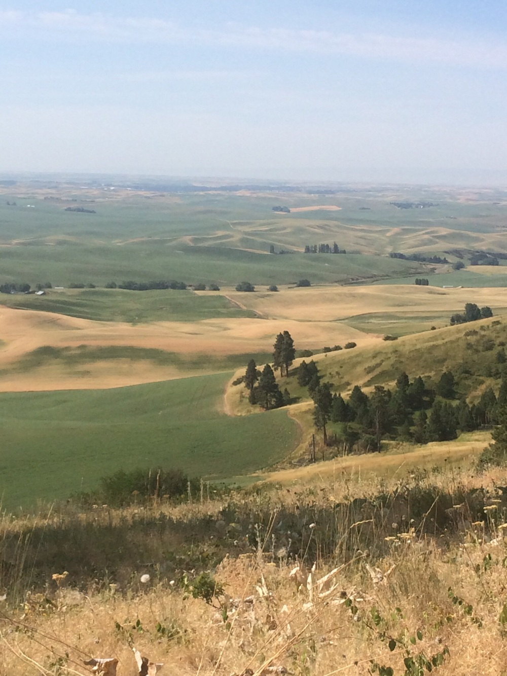 Looking out at the Palouse landscape from Kamiak Butte.