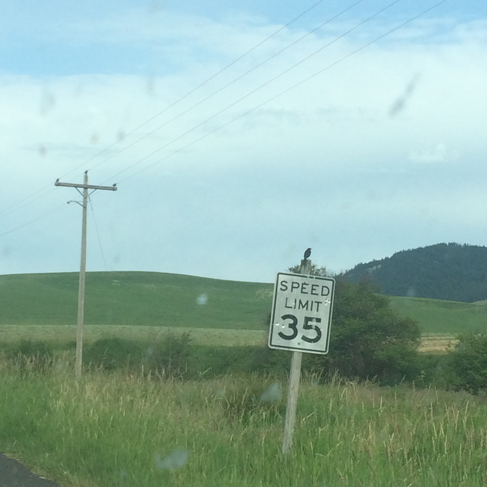 A bird rests on a speed mile sign.