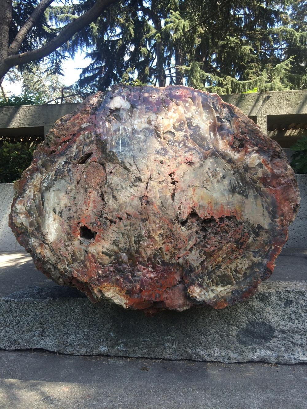 Petrified wood log, Oakland Museum of California.
