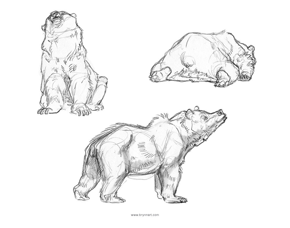 Group1-Bears.jpg