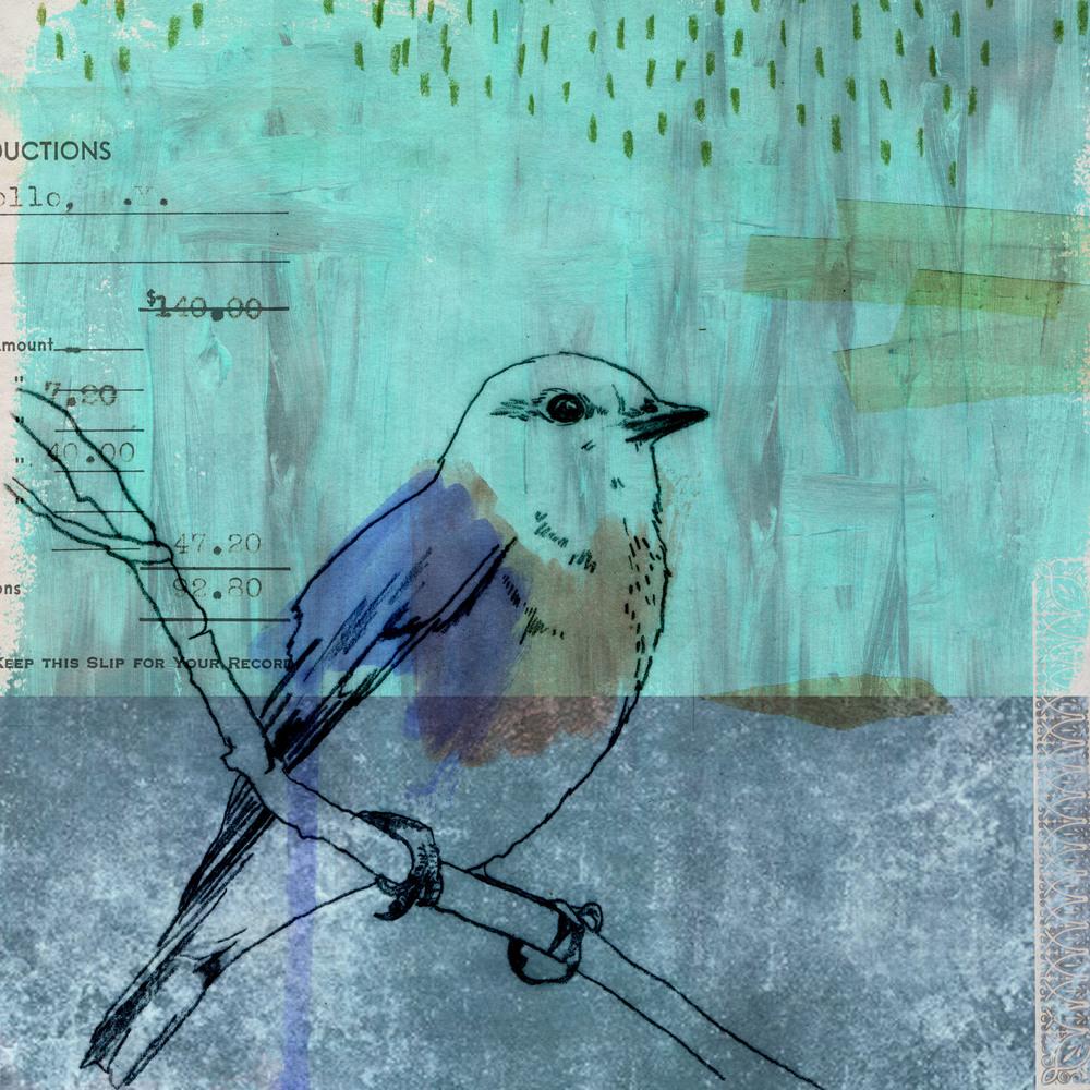 Eastern Bluebird - New York and Missouri