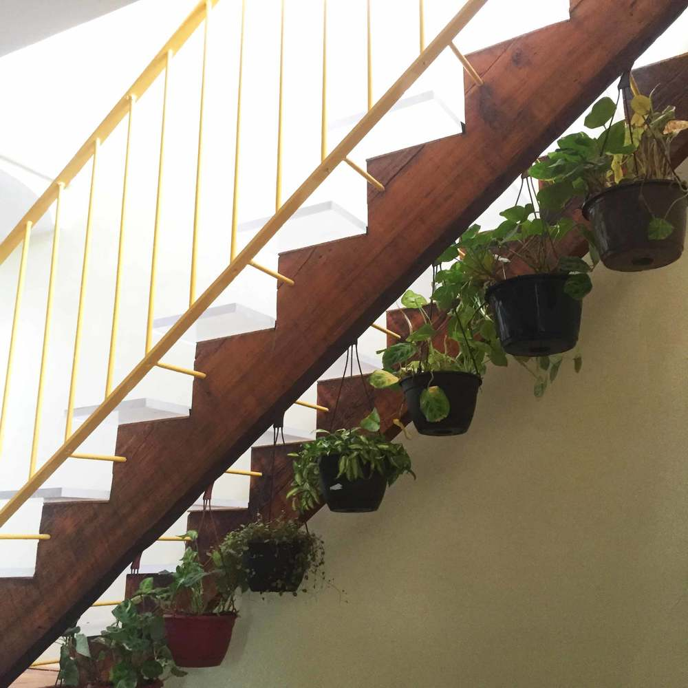 The stairs leading up to the roof are made with salvaged plexi-glass, and allow light to shine on the hanging plants below.