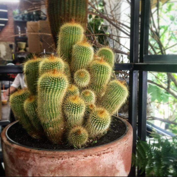 Cute cactus.