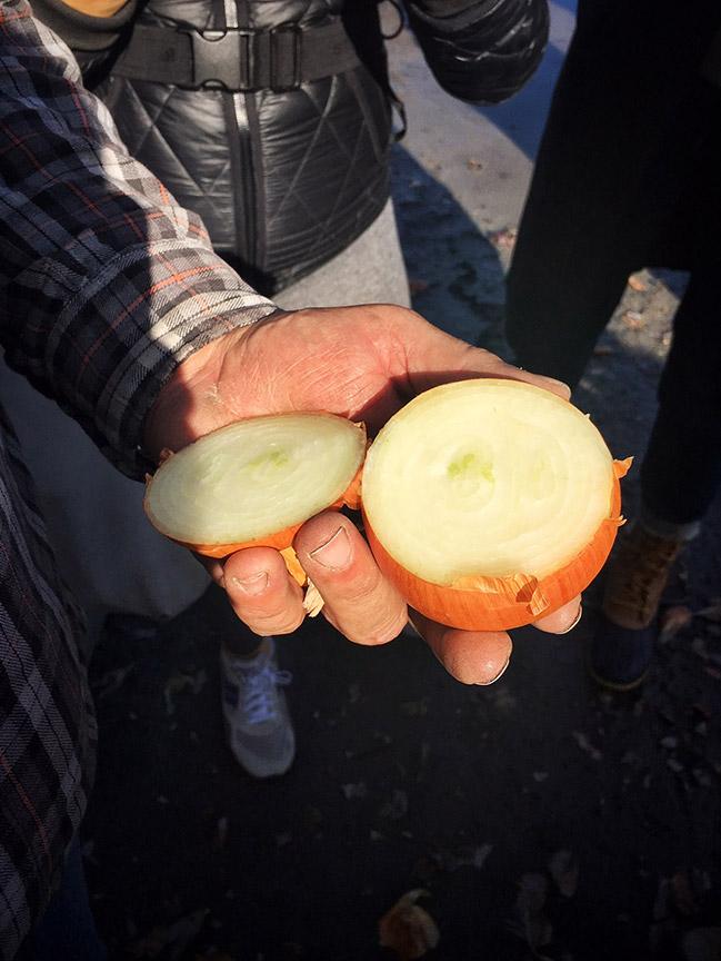 Rick cuts open a yellow onion.