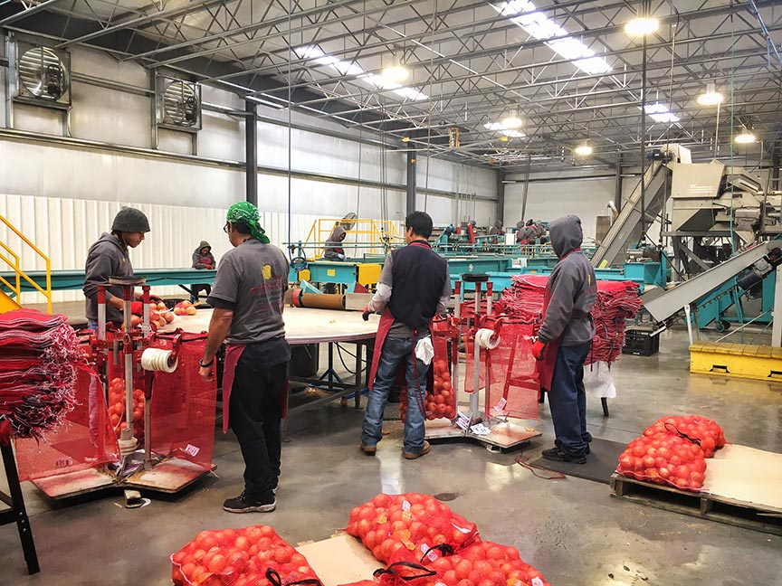 The packaging facilities are clean, well-lit, and staffed year round. The produce is sorted and graded before being packaged for sale. Each package is labeled with a Julian date code and lot number so that it can be traced back to its source. This enables a quick response in case of any issues or recalls.