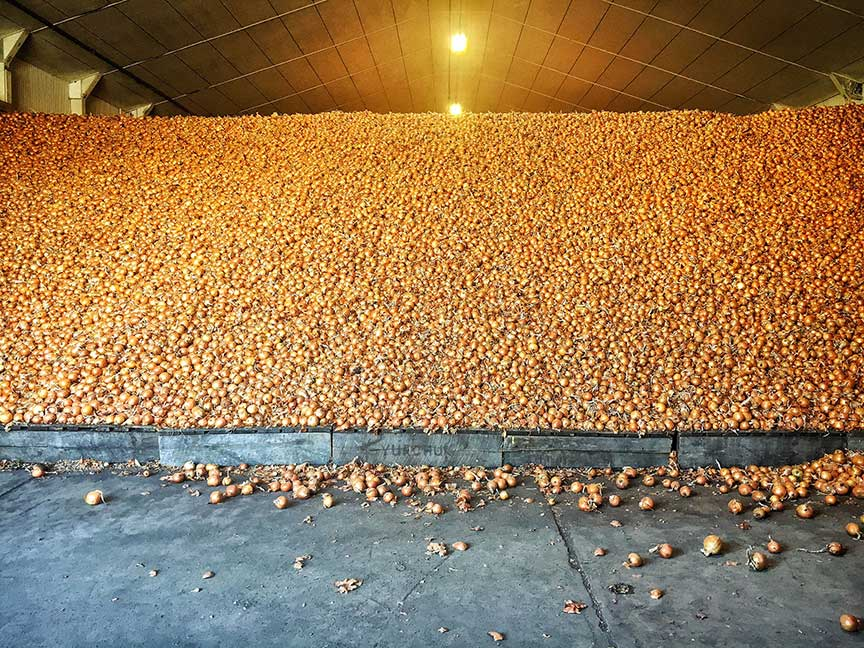 This, ladies and gentleman, is what a warehouse filled with 20 millions pounds of onions looks like!