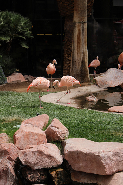 Real flamingos on site.