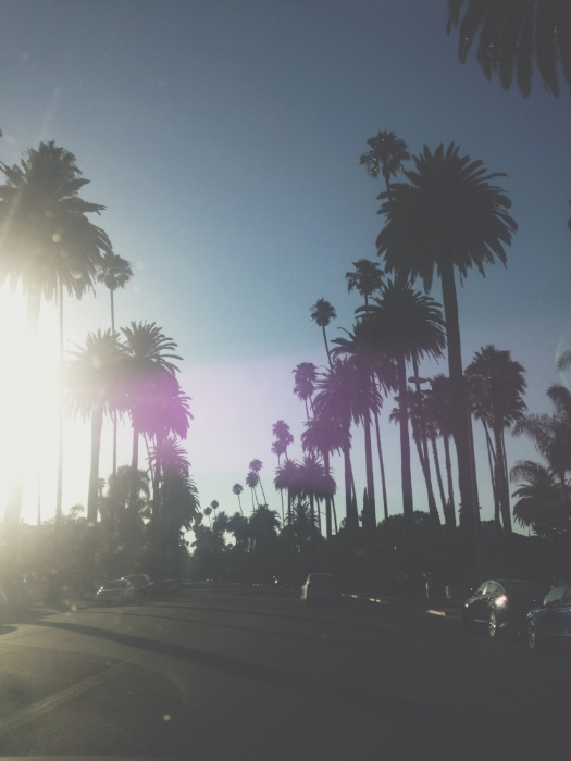 bevery_hills_palm_trees