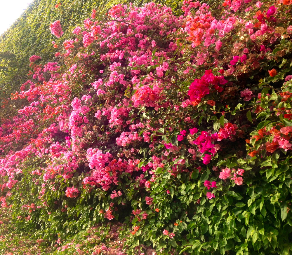 multitude of flowers flower wall