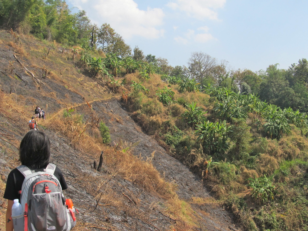 A burned portion of the mountainside
