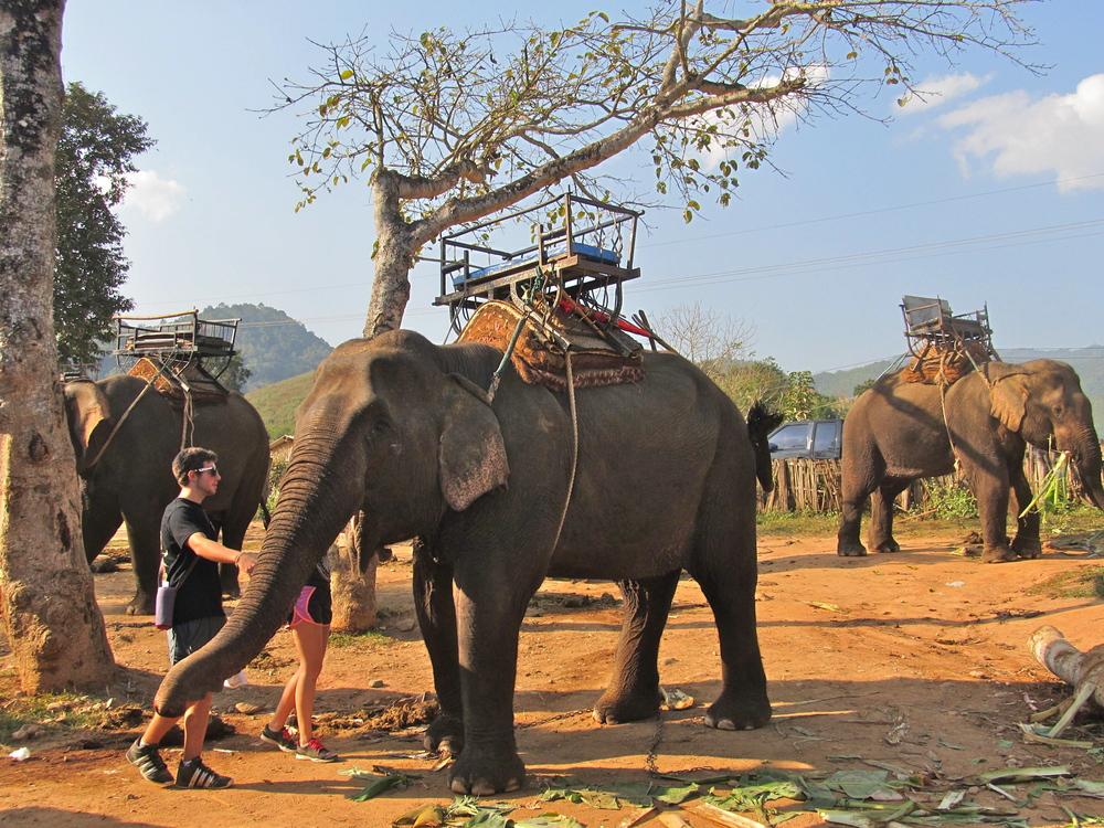 Chiang Rai elephant ride
