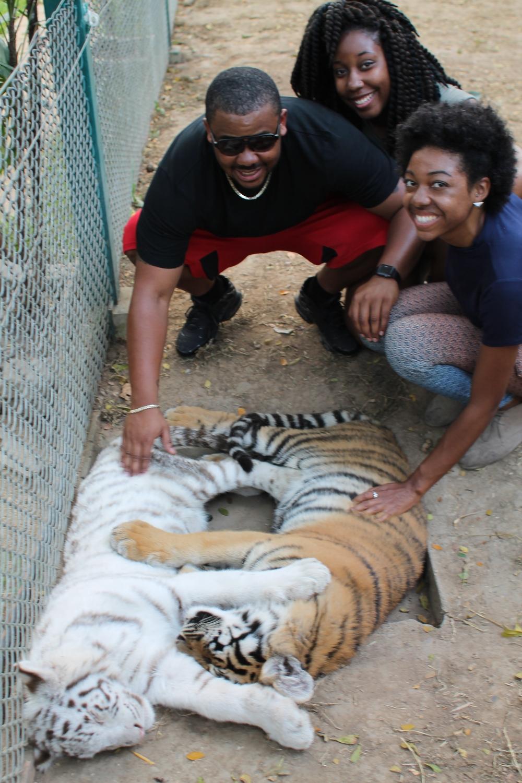 tiger-kingdom-chiang-mai