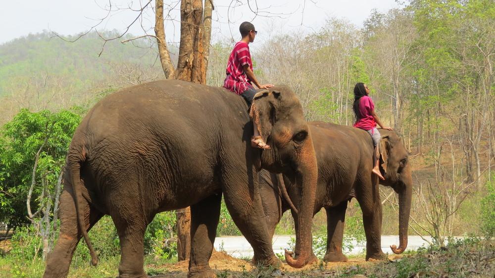 chiang-mai-elephant-ride-chai-lai