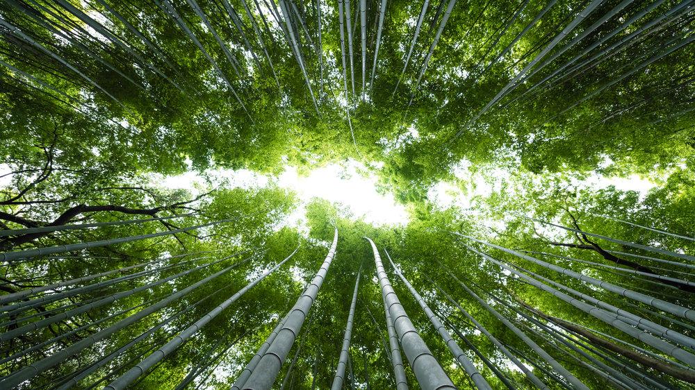 Japan-kyoto-arashiyama-bamboo-grove