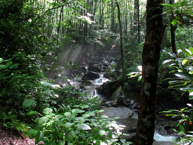 Balsam Creek along Alum Cave Trail (lower portion)