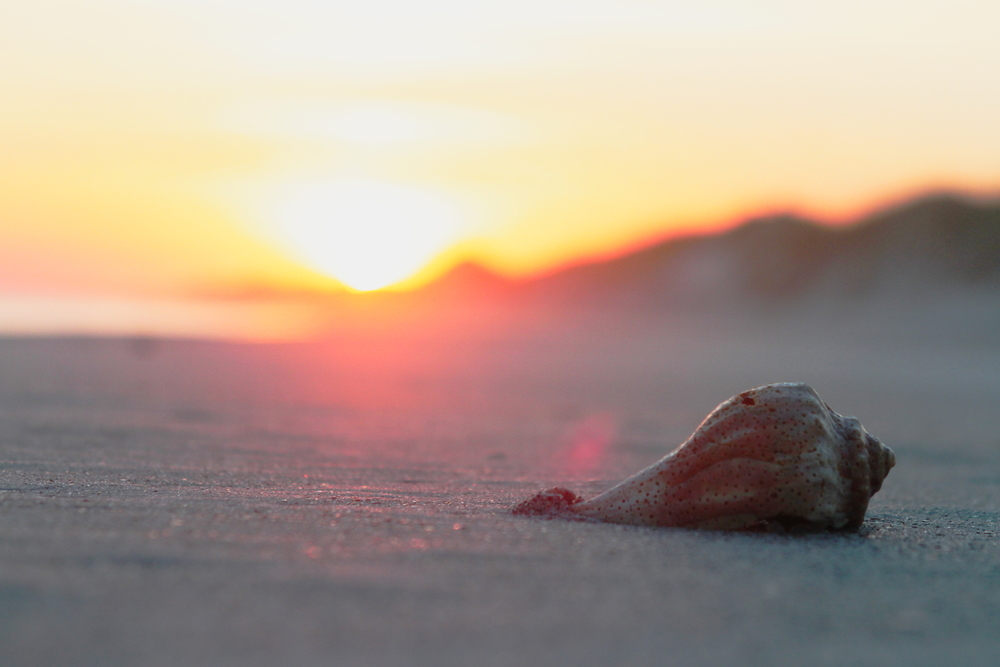 A nice shell washes up as the tide goes out just before sunset