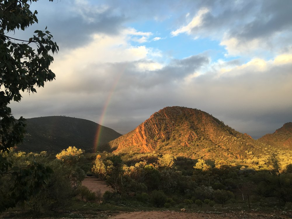 Arkaroola Stn. Flinders Ranges SA