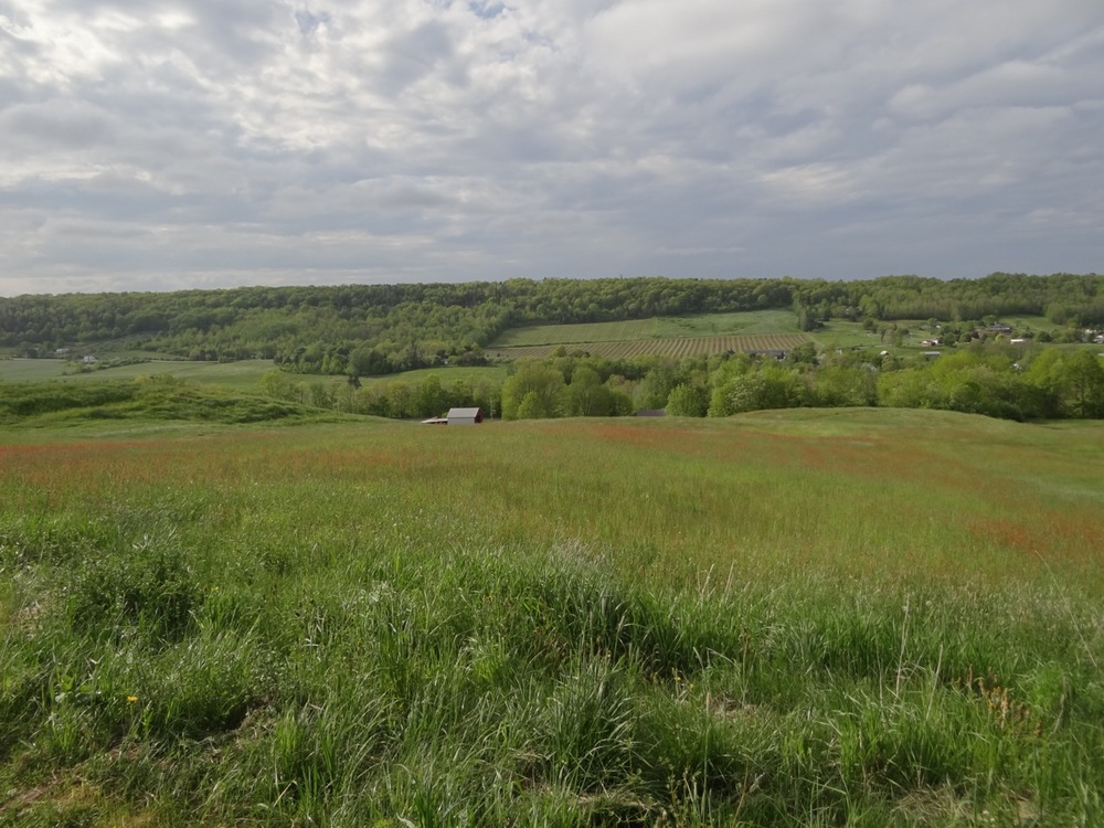 West View - Gaspereau Valley