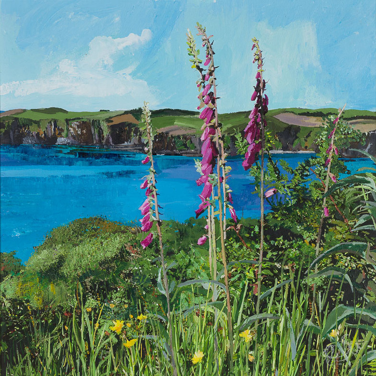 ''Foxgloves at Squince, Union Hall''