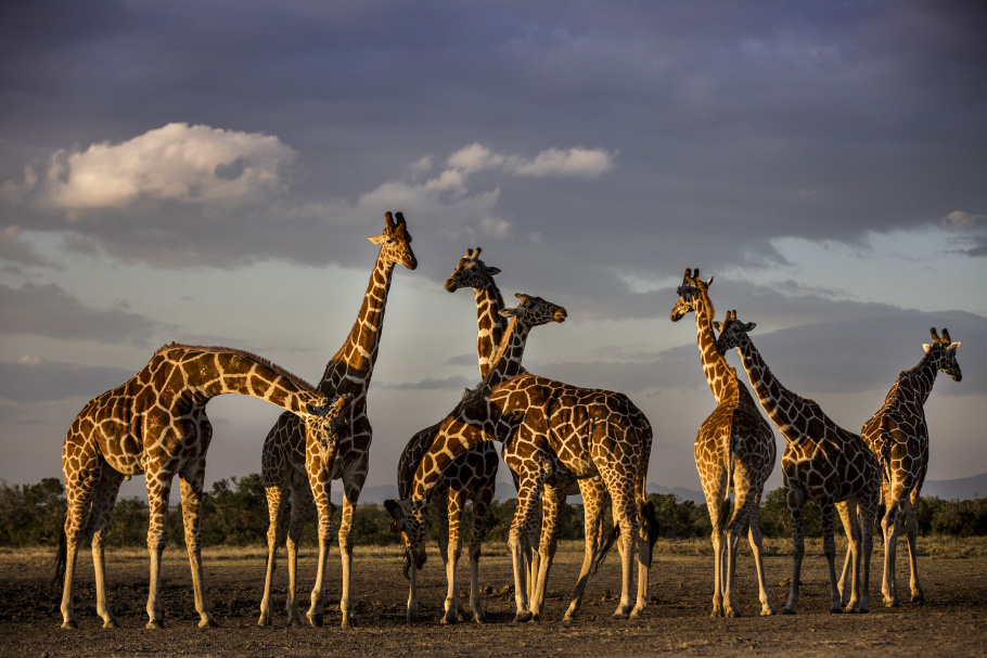 KenyaWild01luistato.jpg