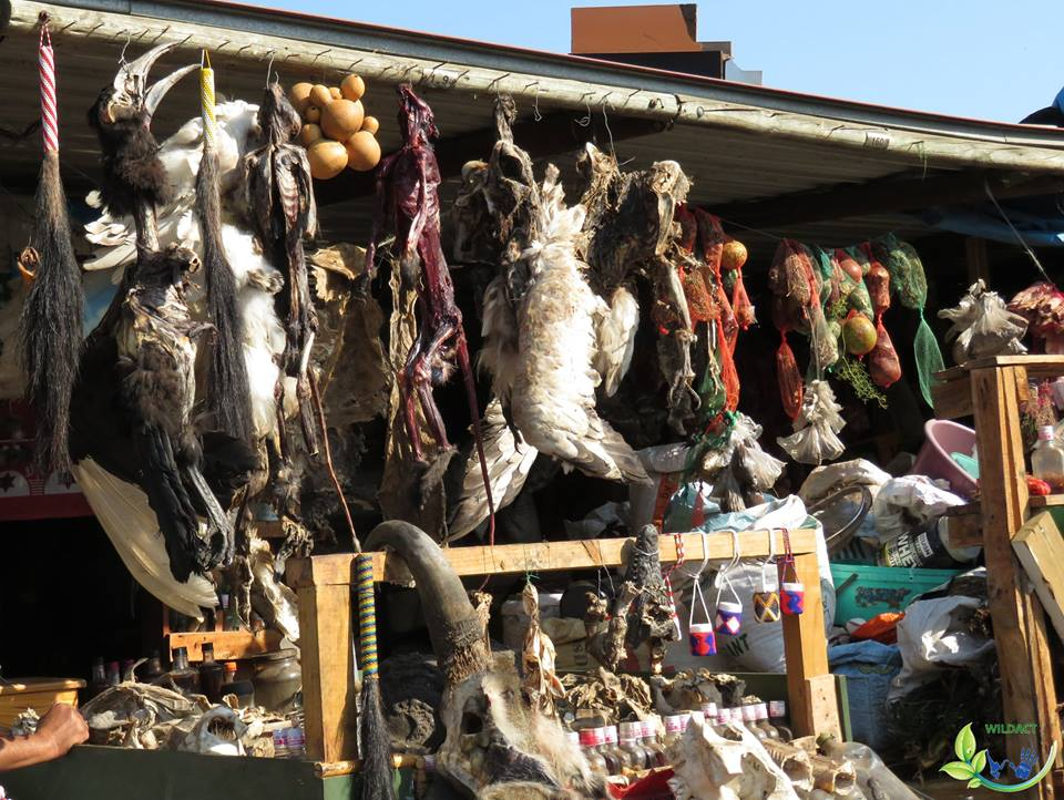 Illegal wildlife trade market in Durban, South Africa - WildAct