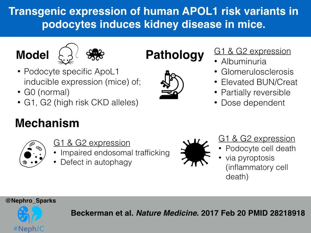 APOL1 and CKD_Becker2017.jpg