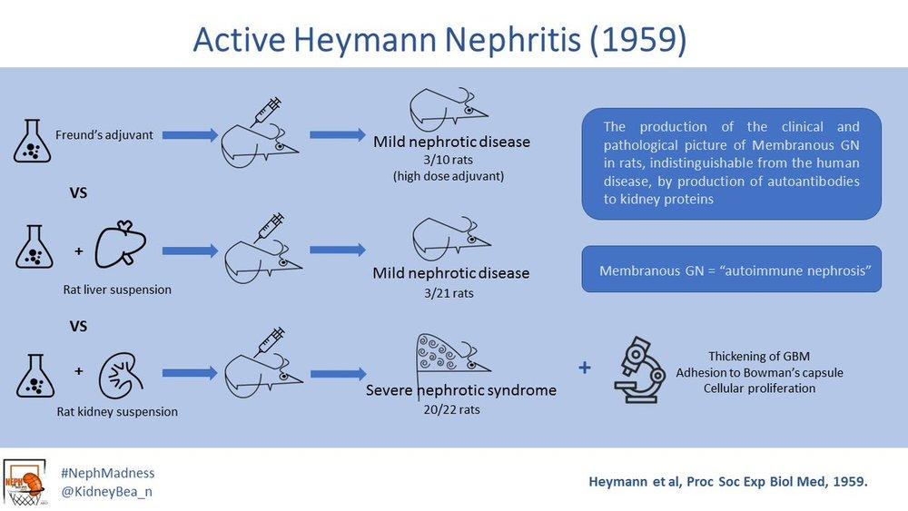 Heymann nephritis_1959.jpg