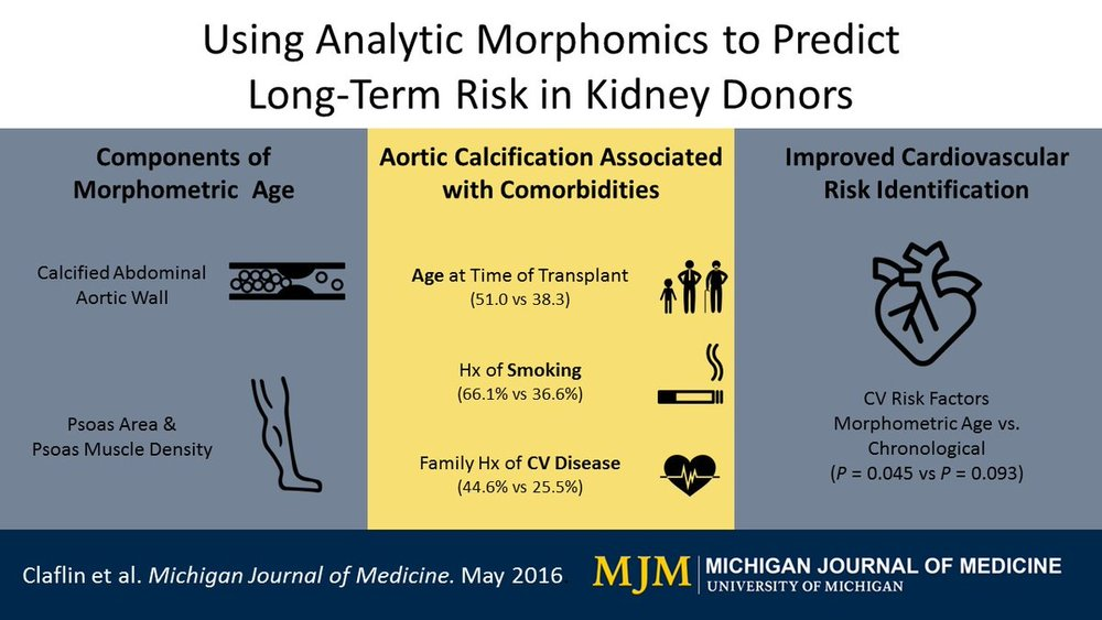 Morphomics to predict risk for kidney transplants.jpg