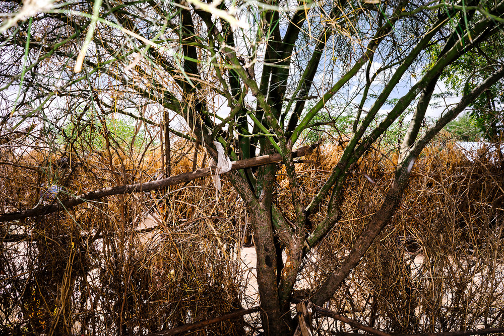A tree grows in one of the LGBT compounds. Most compounds in Kakuma are surrounded with thorny branches for privacy and security. Last fall, homophobic residents of Kakuma set fire to the branches outside of one of the LGBT compounds.