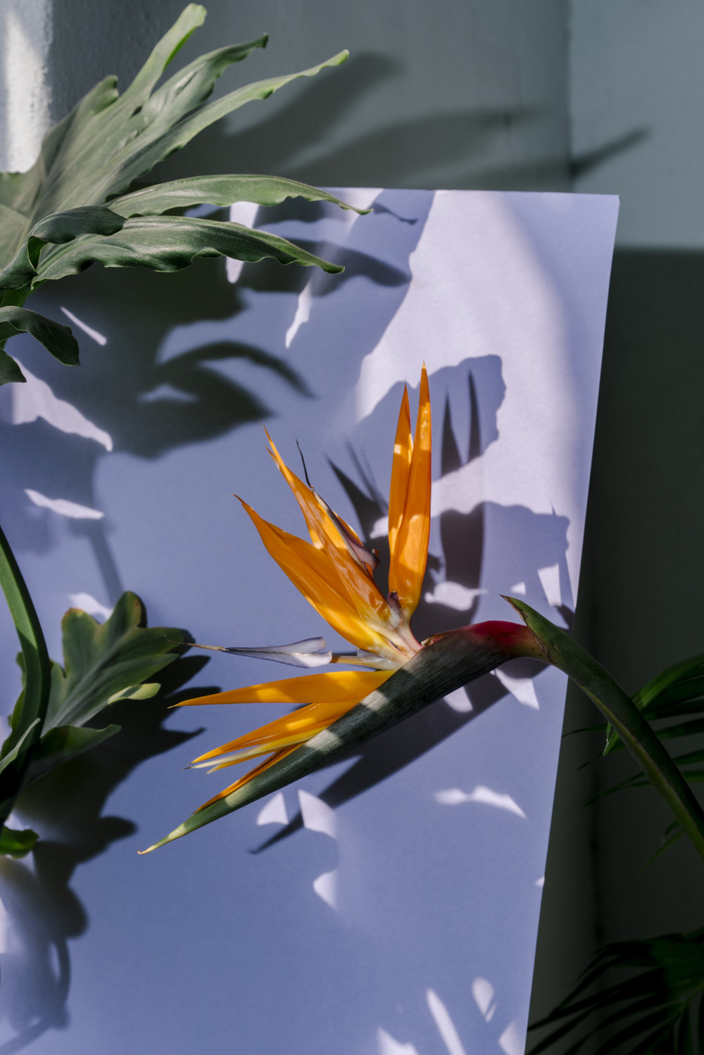 Untitled (Bird of Paradise)