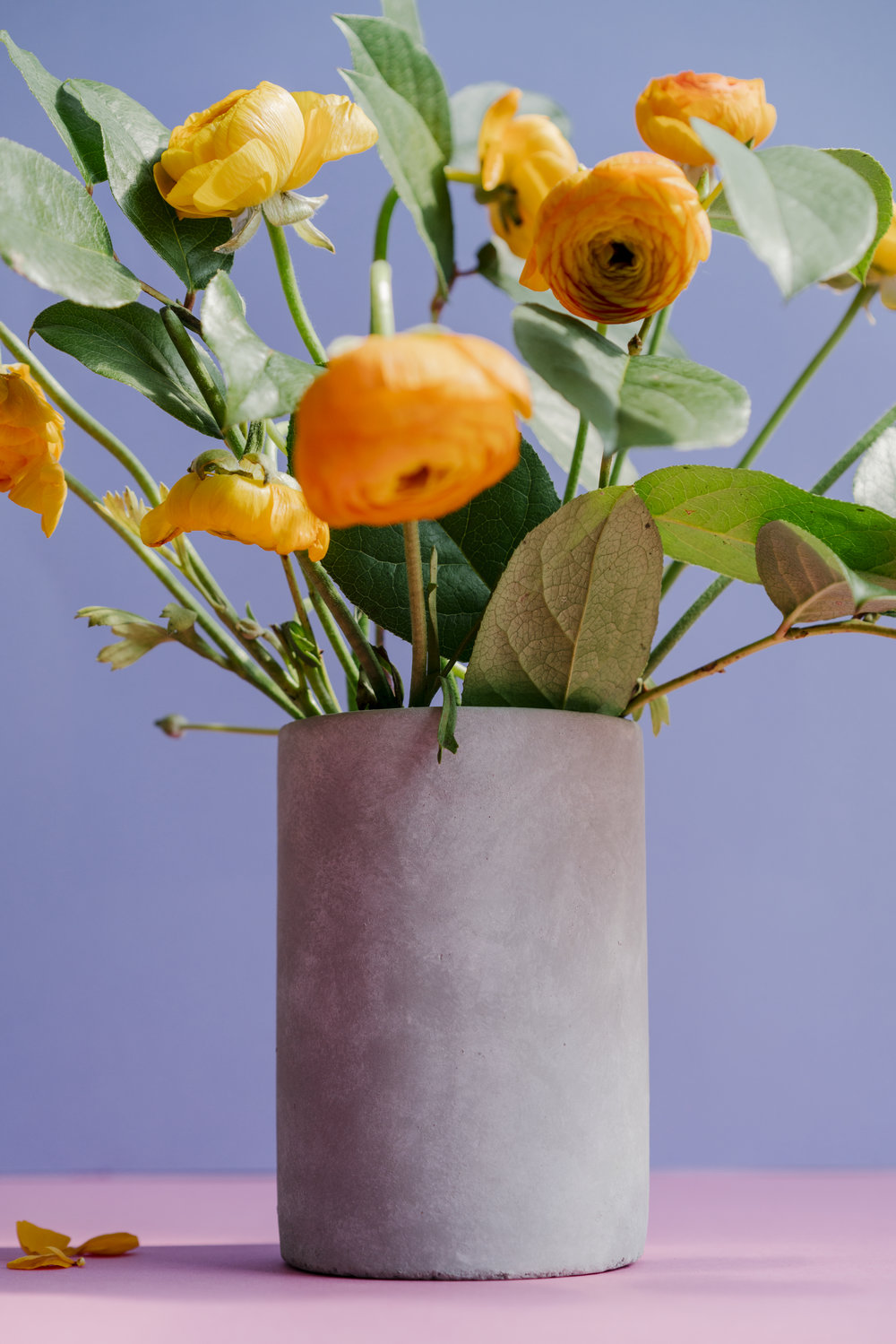 Untitled (Ranunculus)