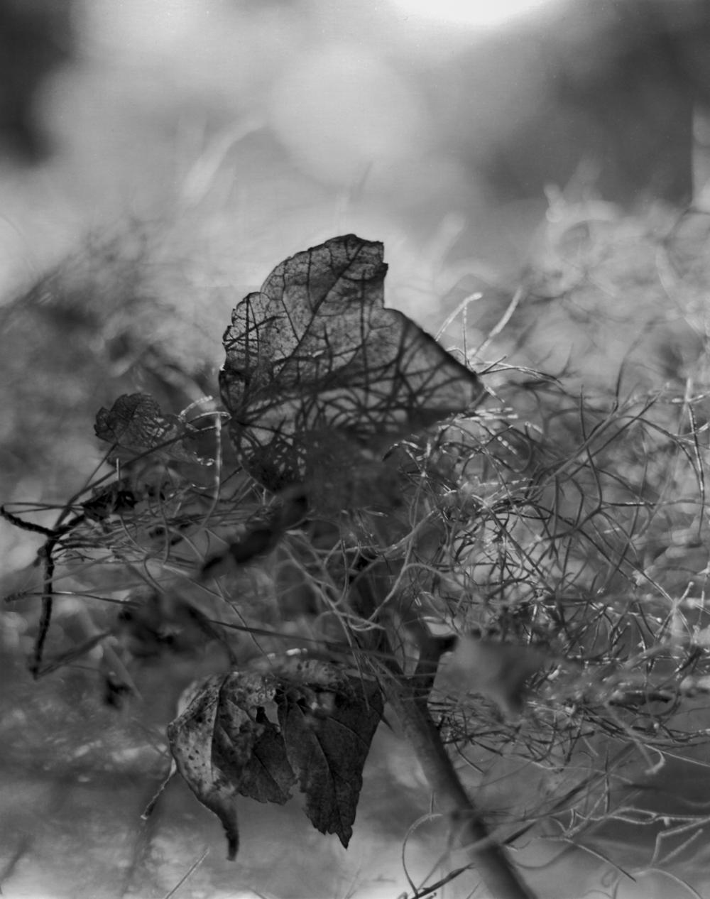 Veins of Life.jpg