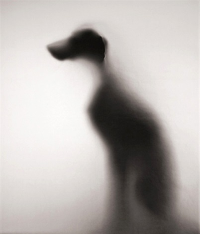 William Wegman   Show of Shadow  2003