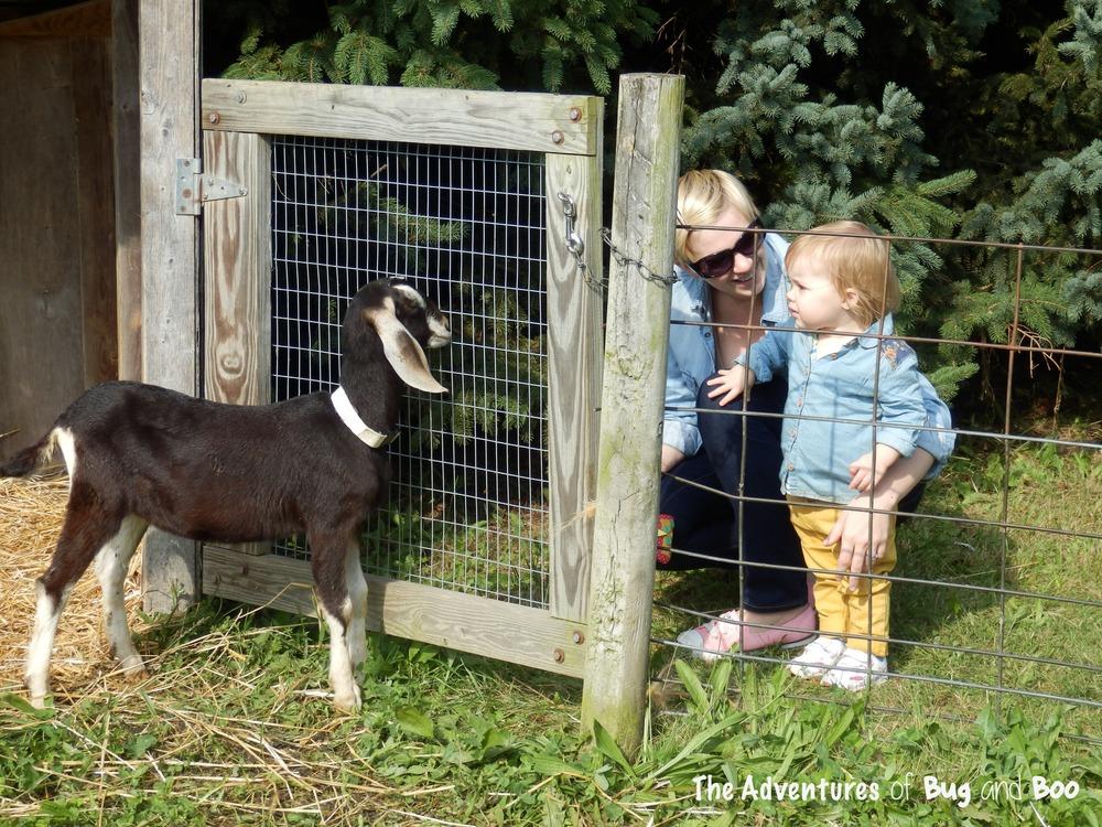 Bug and I feeding goats.jpg